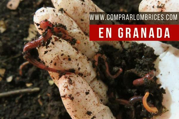 Dónde Comprar Lombrices en Granada