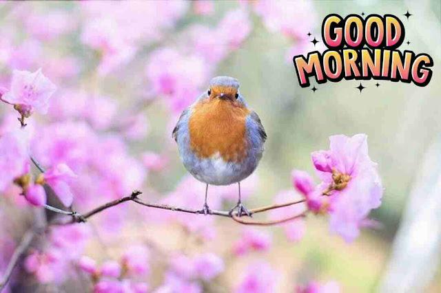 very beautiful good morning image of bird