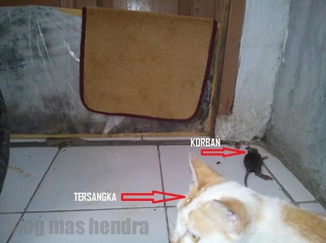 Bangkai Tikus di Depan Rumah - Blog Mas Hendra