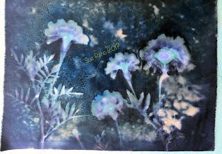 Wet Cyanotype_Sue Reno_Image 181