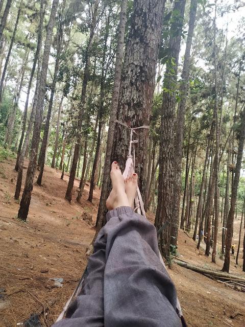 wisata hutan pinus candika riau