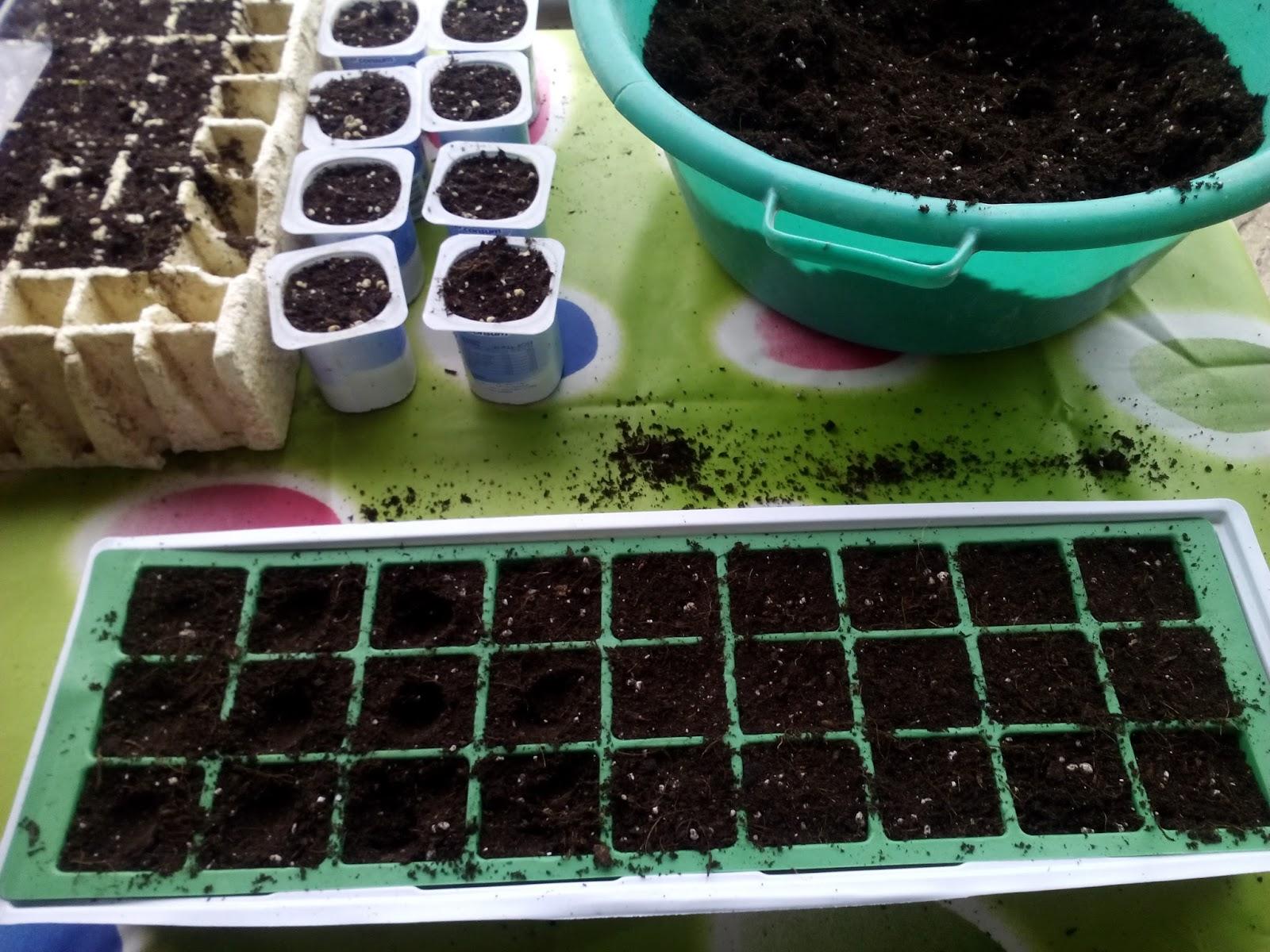 Cultivar el huerto casero semilleros para el huerto - Tierra para semilleros ...