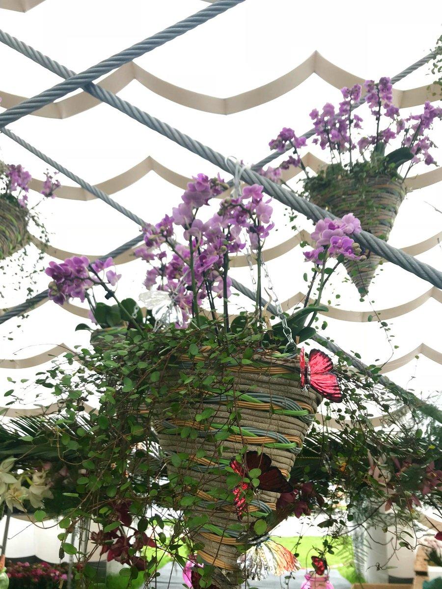 Cesta colgante de mimbre en forma de nido con orquídeas phalaepnosis color rosa
