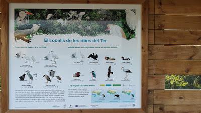 Ocells a les ribes del Ter