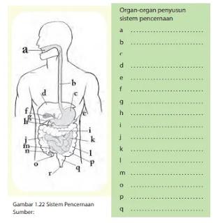 Kunci-Jawaban-IPA-Kelas-7-Halaman-26-27-Sistem-Organisasi-Kehidupan