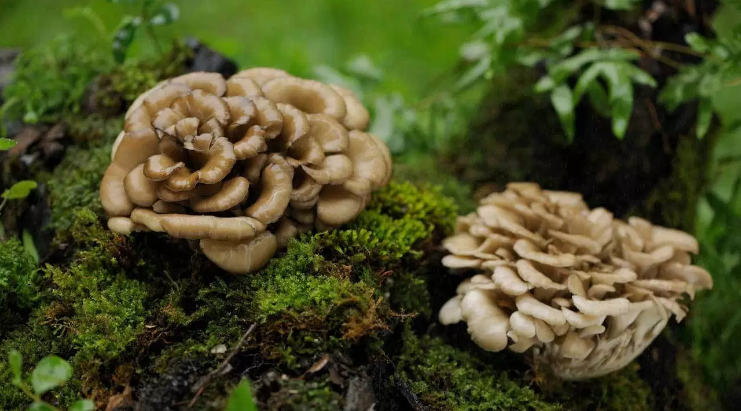 3 Edible Wild Mushrooms (And 5 to Avoid)