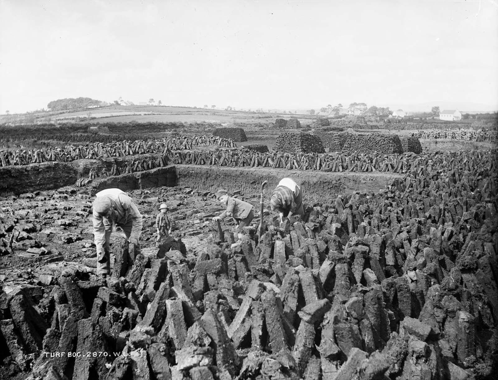 A family cuts turf near Ballymena. 1885.