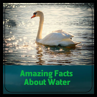 Slogans On Save Water In English,Amazing facts about water