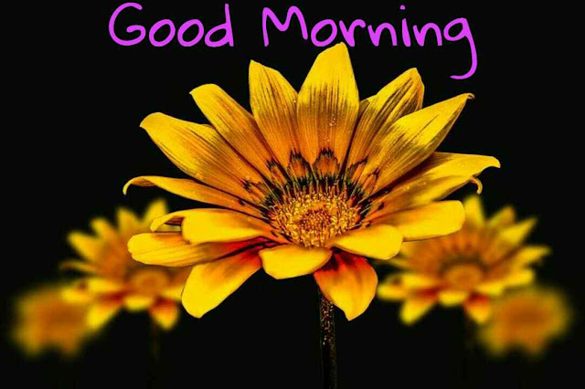 beautiful good morning image with nature yellow flowers
