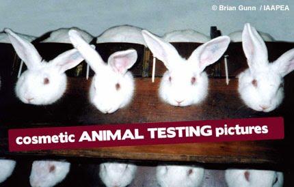 Animal testing makeup