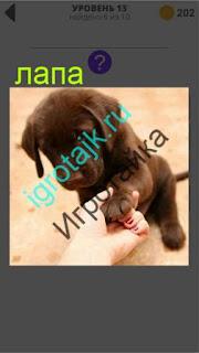 коричневый щенок дает лапу человеку 13 уровень 400 плюс слов 2