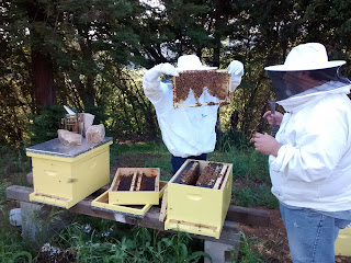 Niece and brother-in-law keeping their bees