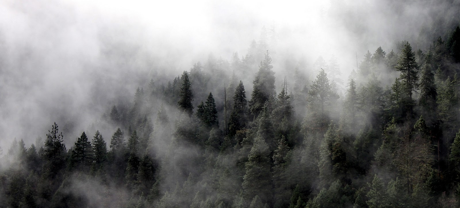The Tree from the Forest: FIRE, SMOKE, VAPORS, AND CLOUDS