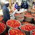 Nigéria : Kano a alloué 10.000 hectares de terres irrigables à la tomate durant cette saison sèche