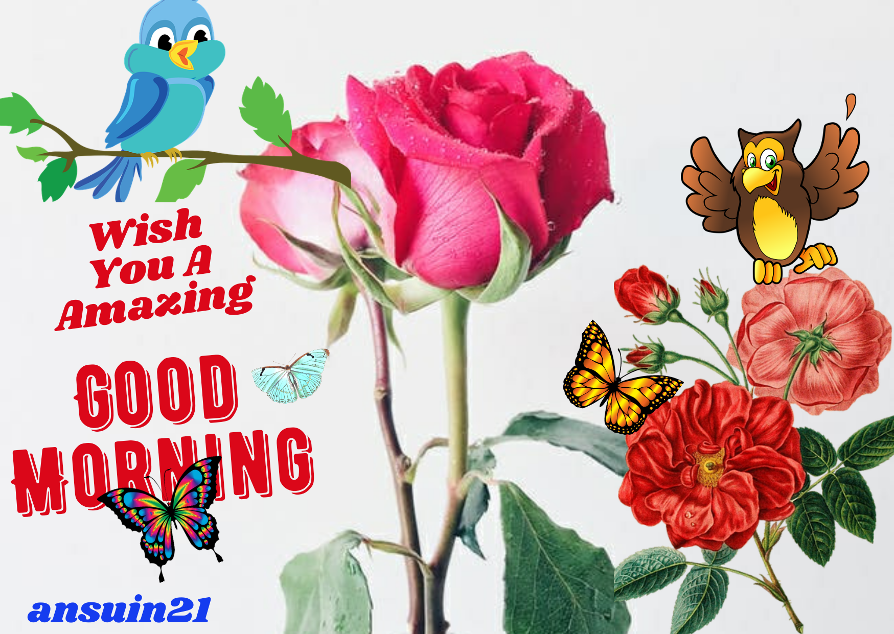 Best Good Morning HD Images for whatsaap free download, Romantic Good Morning English Status, Love Good Morning HD photos,