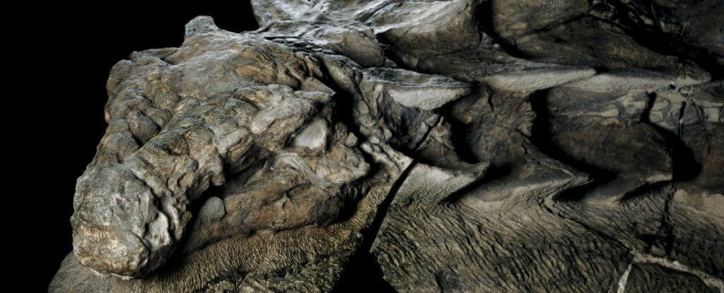 Extremely Rare Dinosaur Fossil Resembling A Statue Was Discovered In Alberta