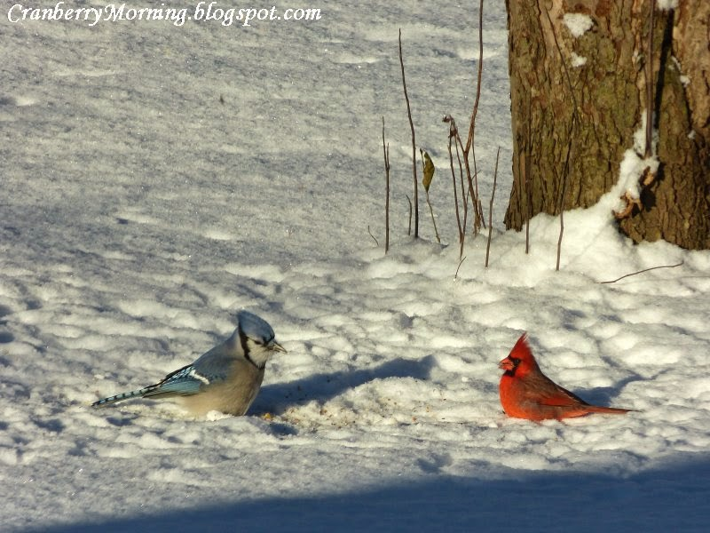 Cranberry Morning Evening And Morning At The Bird Feeders