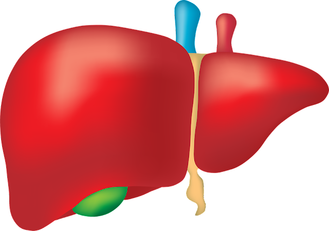 السعرات الحرارية في الكبدة