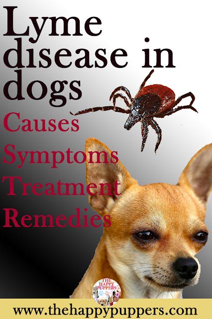 Lyme diseases in dogs