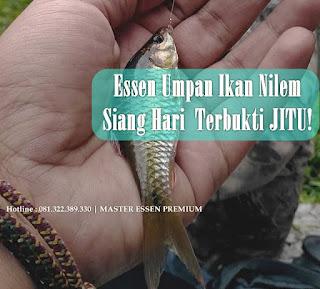Essen Ikan Nilem Khusus Siang Hari