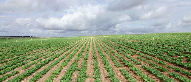 Recursos alimentarios y cultivos