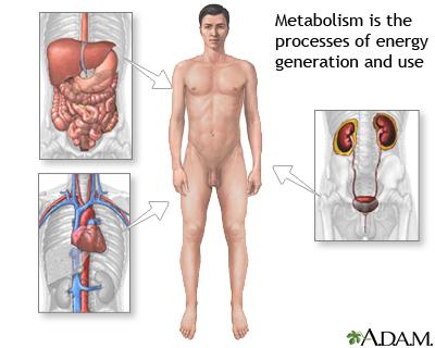 metabolisme melambat, apa itu metabolisme, metabolisme tubuh, metabolisme orang dewasa, alkohol, alur metabolisme, asupan gizi, diabetes, International Journal of Obesity, jaringan otot, kafein, kalori, kanker kulit, kekurangan kalsium, kepadatan tulang, lemak, menstruasi, metabolism, metabolisme, Metabolisme Anda Melambat, minum susu, proses metabolisme, protein, sinar matahari, vitamin D, waktu makan, yoghurt, zat besi