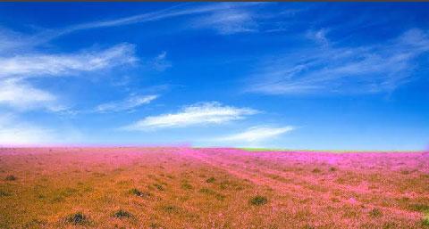 Cara Merubah Warna Rumput di HP Supaya Warna Warni