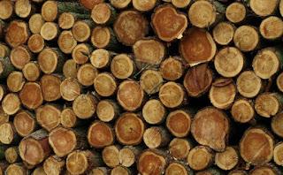 معنى الخشب في حلم العزباء