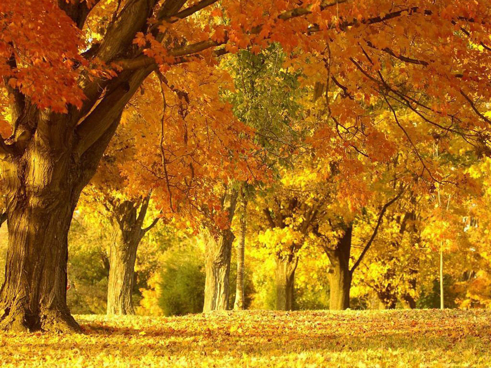 Super Autumn Scenery Wallpapers