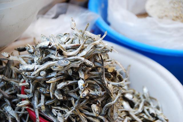 manfaat ikan teri bagi kesehatan tulang