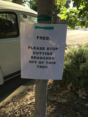 "Slender tree trunk with sign ""Fred, Please stop cutting branches off of this tree"""