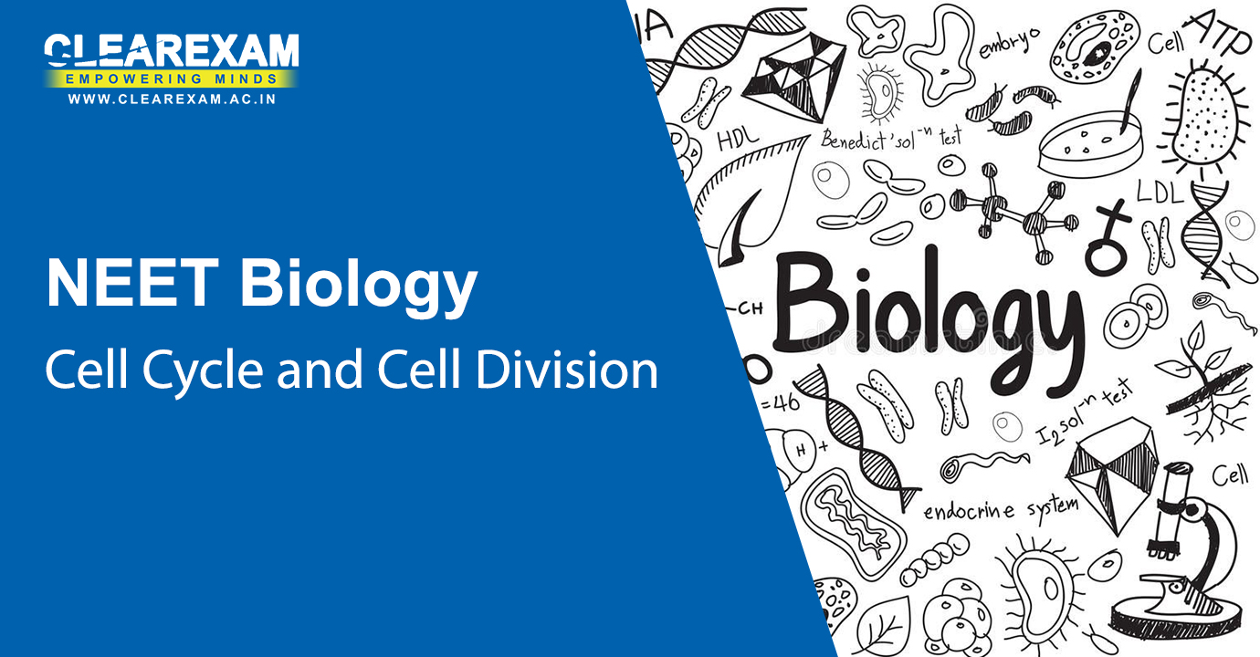 NEET Biology Cell Cycle and Cell Division