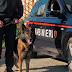 """Casamassima (Ba). Arrestati dai carabinieri due coniugi dal pollice verde. L'odore della """"maria"""" coltivata nel seminterrato si sentiva persino nell'abitazione [VIDEO]"""