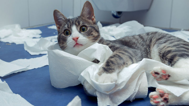 how-do-you-train-your-cat-to-use-the-toilet