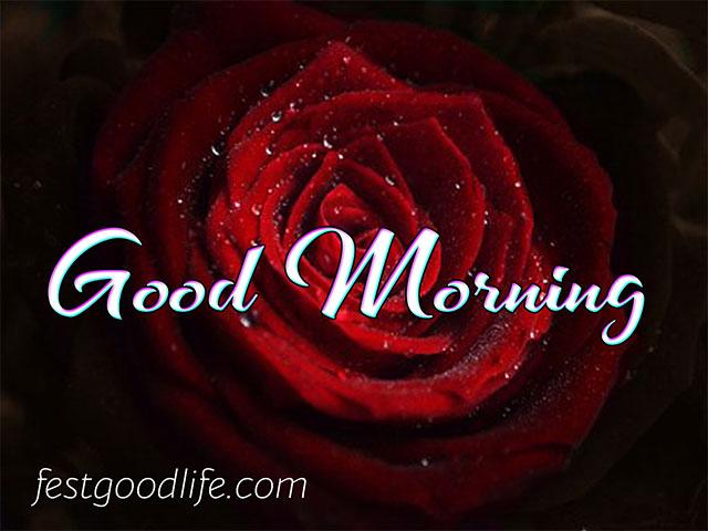 red rose ki photo pics good morning image download hindi  hd