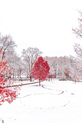 Beautiful Pic Of Winter.