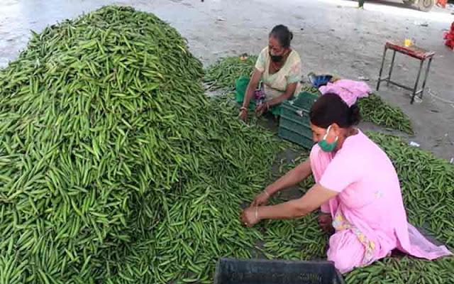 प्रदेश के पहाड़ी मटर की बेंगलुरु में धूम, 110 से 120 रुपये प्रति किलो बिक रहा मटर