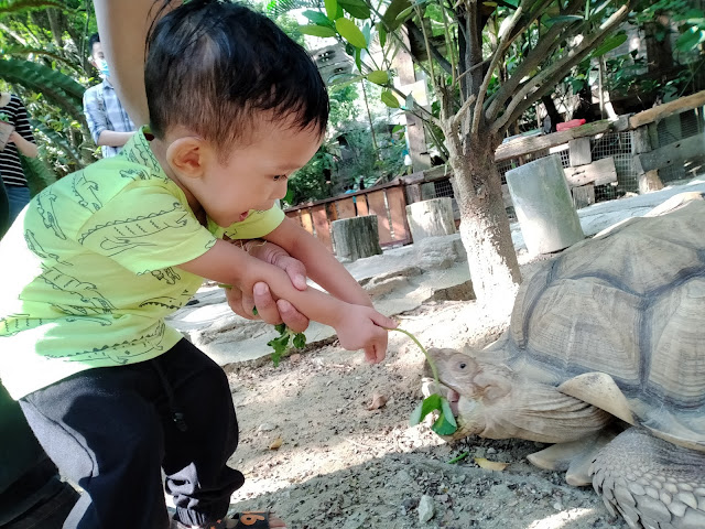 anak kecil main kura-kura di farm in the city petting zoo