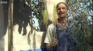 David Rich planting Eremurus Foxtail Lily