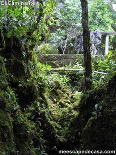 Naturaleza en el Centro Turístico Naciente del Río Tioyacu (Rioja, Perú) 3