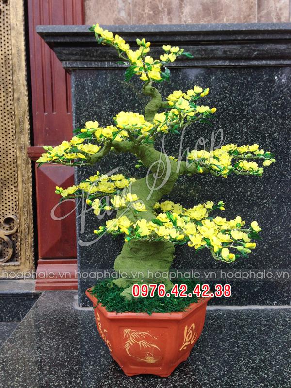 Goc bonsai cay hoa mai o Mac Thai Tong