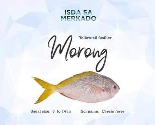 Morong Fish / Dalagang Bukid (Yellowtail fusilier)