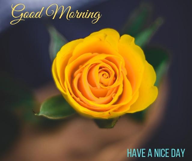 image flower good morning