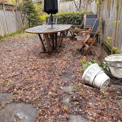 Toronto Back Garden Spring Cleanup Before in Riverdale by Paul Jung Gardening Services--a Toronto Gardening Services Company