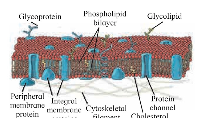 Components of Eukaryotic cell