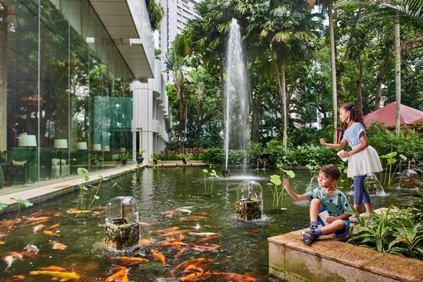 Fish Feeding at the Koi Pond, Shangri-La Hotel, Kuala Lumpur