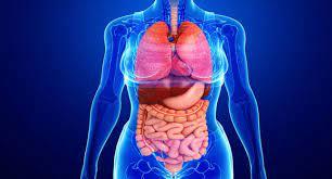 كورس أونلاين مجاني و بشهادة معتمدة بعنوان تعرّف على جسمك لجميع طلاب الأفرع الطبية