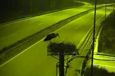 Βίντεο με την πρώτη άφιξη του πελαργού στην Εγνατία την νύχτα