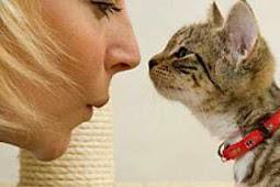 Mengajak si kucing Berbicara. Emang Bisa Gitu?