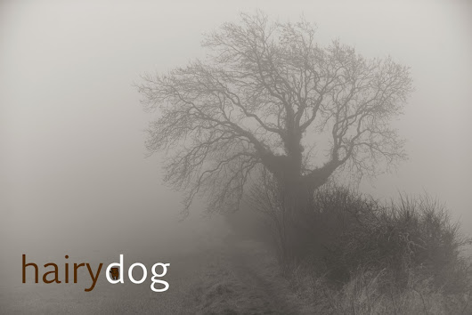 Hairy Dog Photography Blog: Misty day Dog Photography, Portable Studios and Wasted Energy